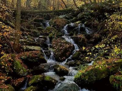 Small Waterfall Over Mossy Rocks