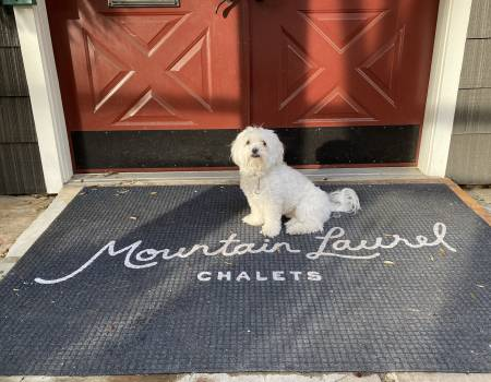 Pet friendly cabins at Mountain Laurel Chalets allow dogs under 30lbs
