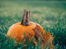 Orange Pumpkin in Field
